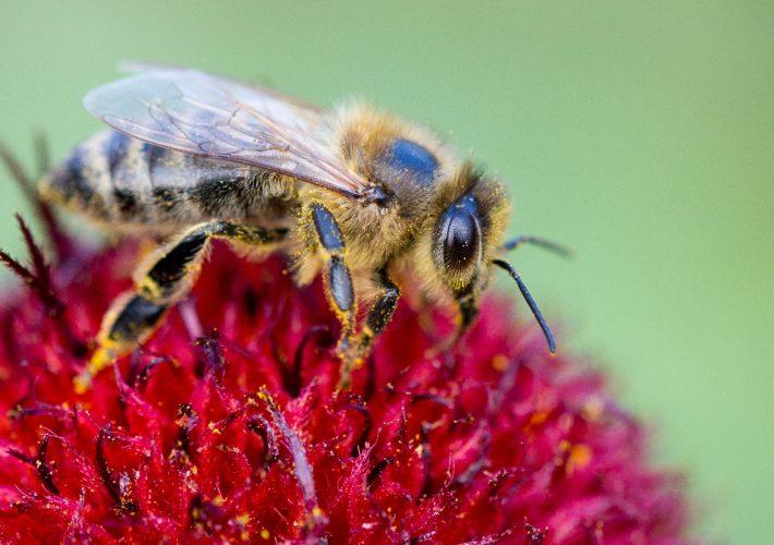 Honey Bee Writing Challenge